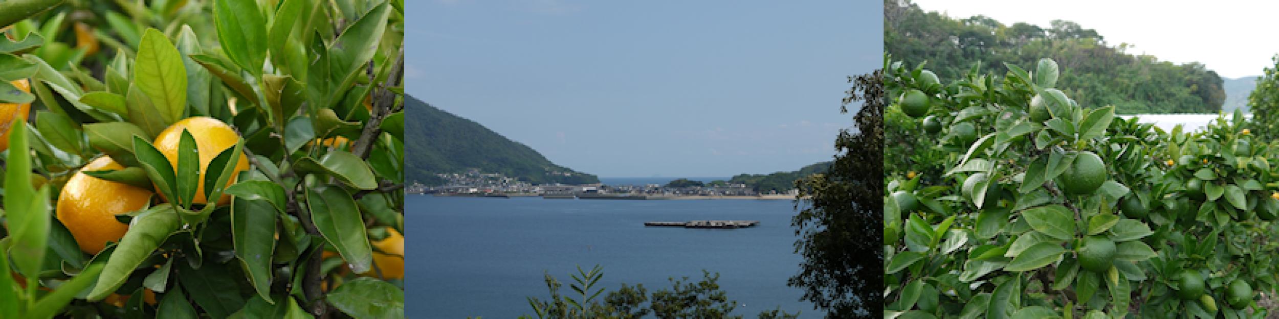 離島暮らしのブログ